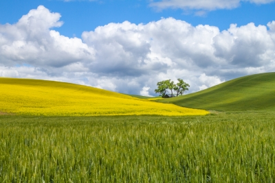 Palouse Highlights