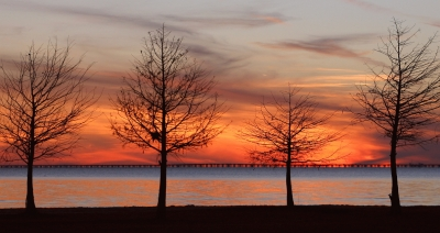4 Trees At Sunset