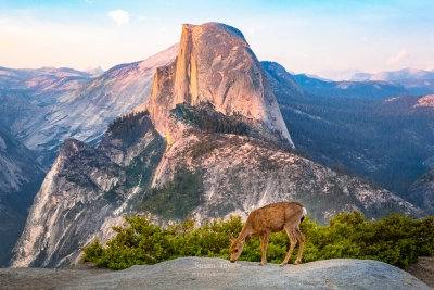A Welcomed Visitor, Yosemite