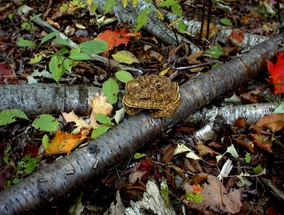 Fall Forest And Fungus