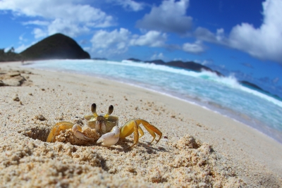 A Crab's World