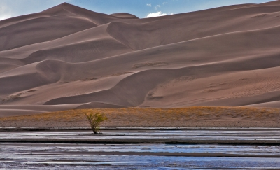 Great Sand Dunes, Lonely Tree
