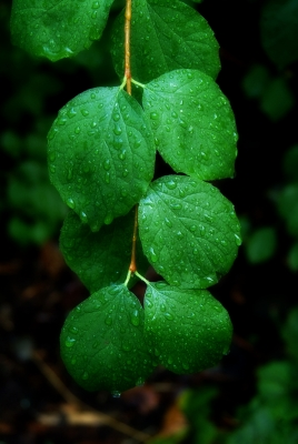Drops Of Green