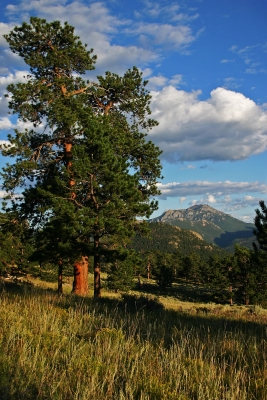 Rocky Mountain National Park Scenic Landscape