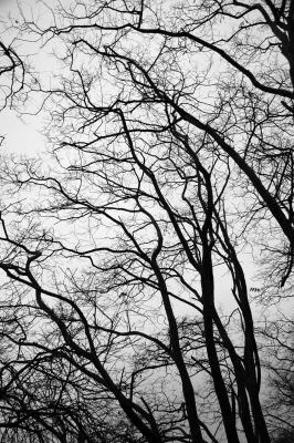 Leafless Trees