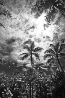 Lost In The Palms