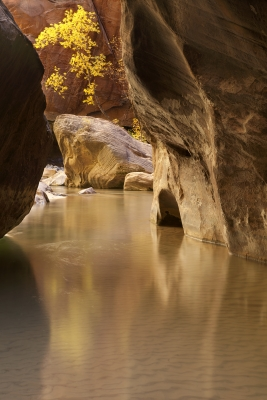 Fall In The Narrows, Zion National Park