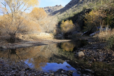 Winter  Colors In Sabino Canyon