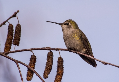 Hummer Hanging Out