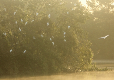 Hazy Morning Rookery