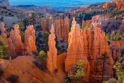 Bryce Canyon Morning Hoodoos