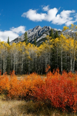 Autumn In The Bow Valley, Banff National Park