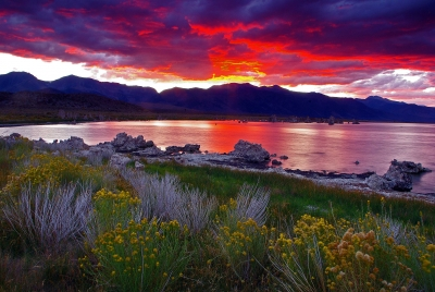 Natures Colors At Mono Lake