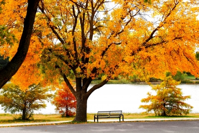 Fall  Bench At The Lake