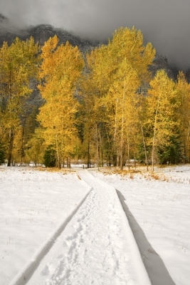 Yellow Trees In Snow