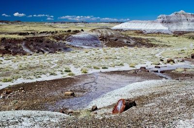 A View Of The Petrified Forest