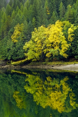 Autumn Reflections, Clark Fork River