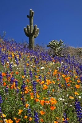 Spring In The Arizona Desert