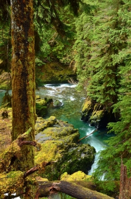 Upper Quinault River