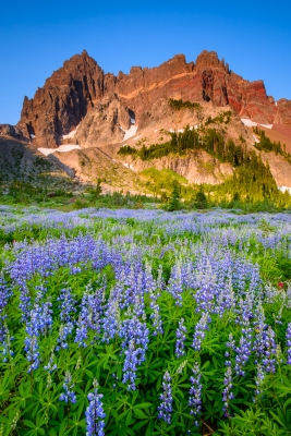 Wildflowers At Sunrise, Mt. Jefferson Wilderness, Or