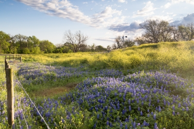 Texas Hillside