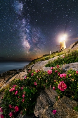 The Roses Of Pemaquid Point