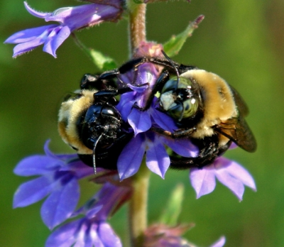 Hungry Bees