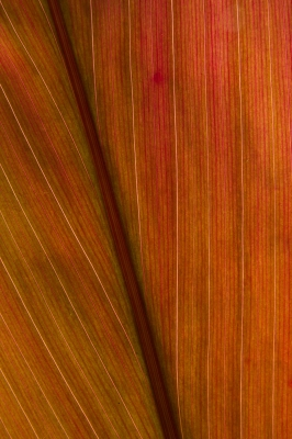 Ti Leaf Abstract 2