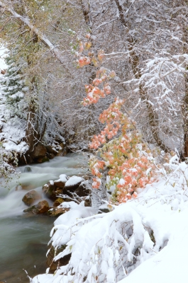 Fall Colors And First Snow