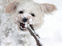 Abominable Snow Doggy