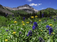 Upper Yankee Boy Basin