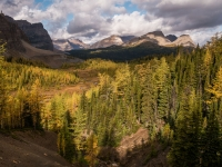 Autumn In Mt Assiniboine Park
