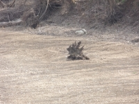 Tree Stump In The Midst Of Sand