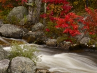Ausable Autumn