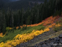 Fall Colors At Mount Rainier National Park