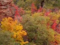 Zion Colors