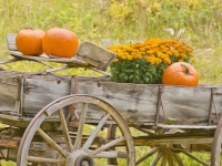 Wagon & Pumpkins