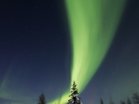 Sweeping Aurora Over The Taiga