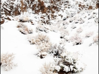 Alabama Hills Blizzard
