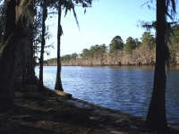 Caddo Lake Bayou