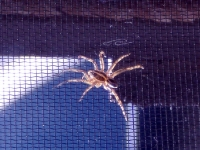 Spider On My Screen