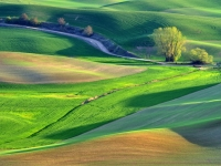 Spring In Palouse
