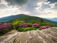 Jane Bald In Bloom - Roan Highlands Landscape
