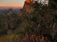 Indian Paintbrush And Moonrise At Sunset