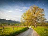 Spring On Hyatt Lane In Cade's Cove - Smoky Mountains