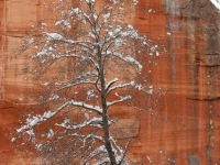 Sandstone And Snow