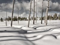 Afternoon Shadows - Yellowstone