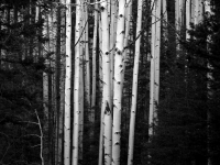 Aspens Of Flagstaff