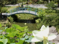 Bridge In The Houmas House Garden