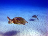 Sandy Sea Turtles